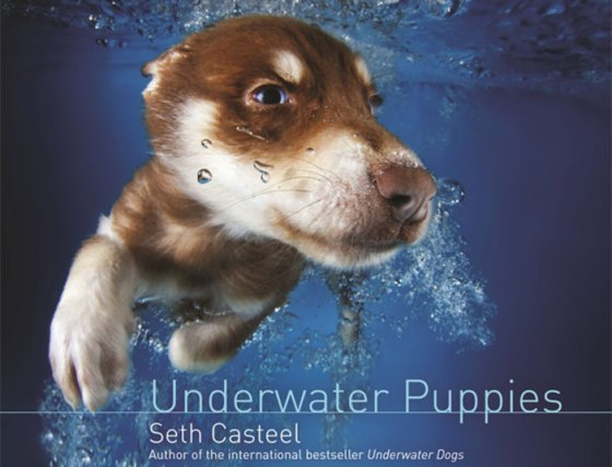 underwater-puppies_3040299k