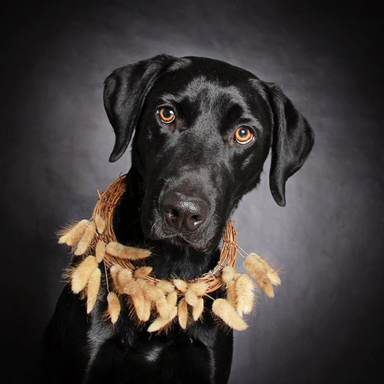 black-dog-portraits-floral-crown-guinnevere-shuster-4